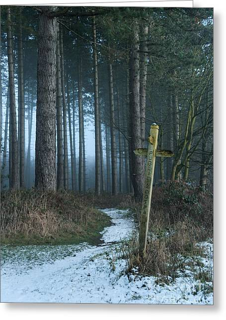 Cannock Chase Greeting Cards - Gloom on the Chase Greeting Card by Ann Garrett