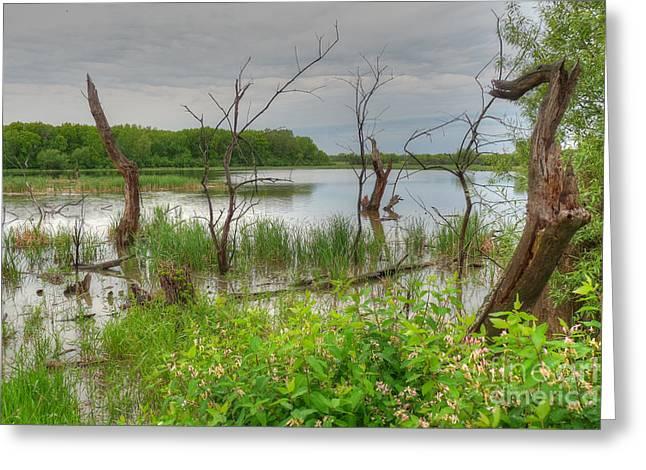 Vale Greeting Cards - Gloomy Swamp Corner Greeting Card by Deborah Smolinske