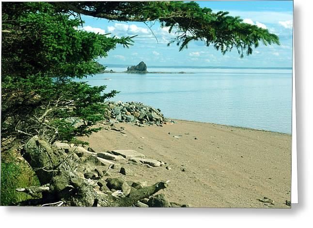 Minas Basin Greeting Cards - Glooscap Trail at Five Islands Greeting Card by Janet Ashworth