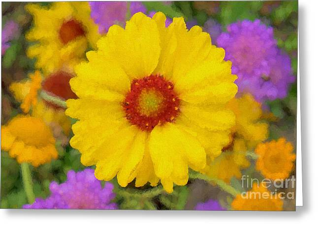 Short-lived Perennial Greeting Cards - Gloriosa Daisy Greeting Card by Allan Bell