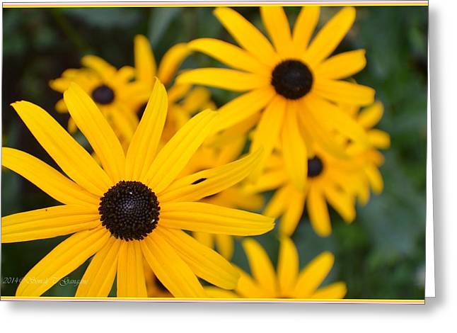 Oxen Framed Prints Greeting Cards - Gloriosa Daisy Greeting Card by Sonali Gangane