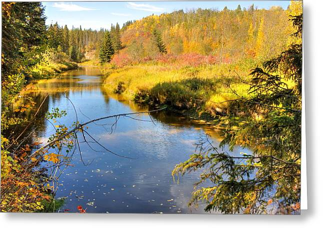 Alberta Greeting Cards - Glorious Autumn Greeting Card by Jim Sauchyn