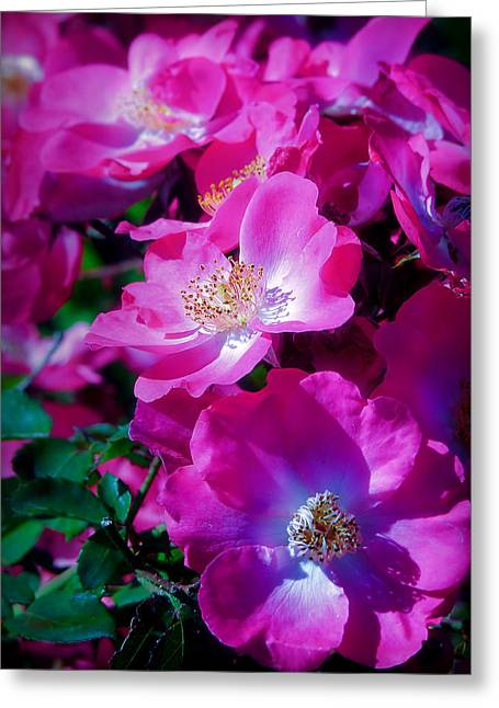 Glorious Blooms Greeting Card by Lucinda Walter