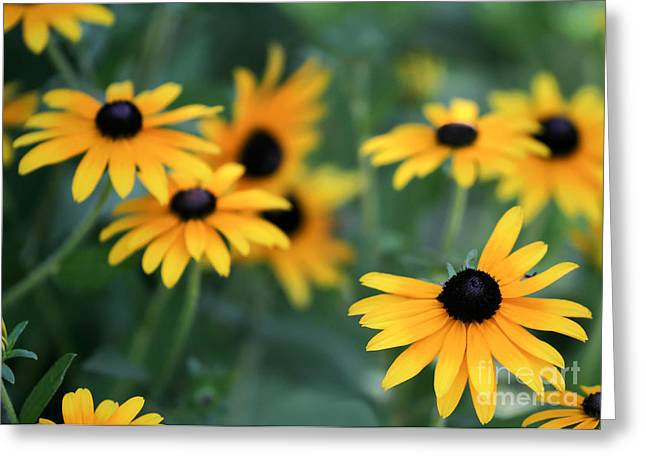 Florida Flowers Greeting Cards - Glorious Garden of Black Eyed Susans Greeting Card by Sabrina L Ryan
