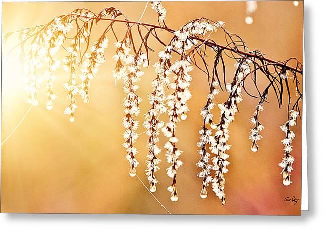 Louisiana Sunrise Greeting Cards - Glorious Morning Greeting Card by Scott Pellegrin