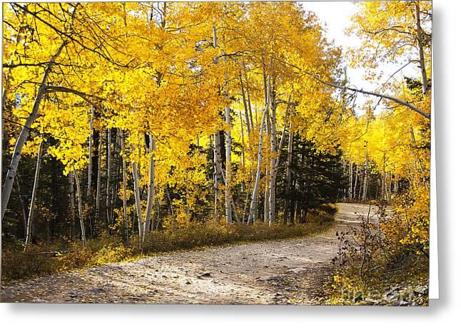 Colorado Pyrography Greeting Cards - Glorious Path Colorado Greeting Card by David  King