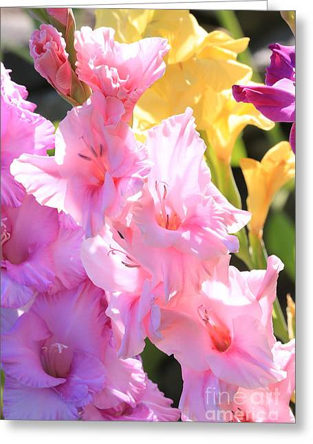 Gladiolus Greeting Cards - Glorious Summer Gladiolus Greeting Card by Carol Groenen