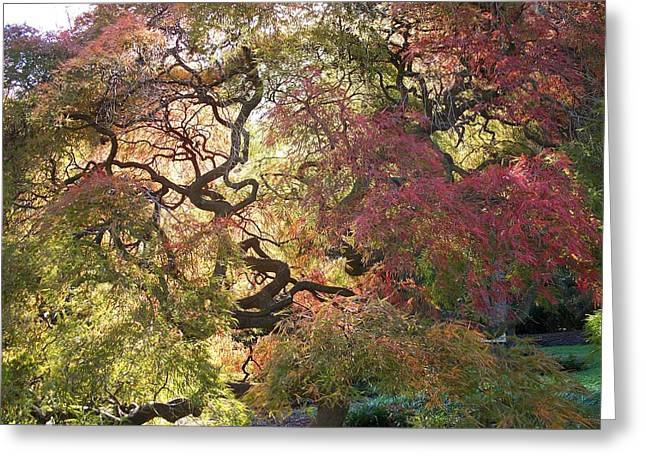 Faa Featured Greeting Cards - Glorious tree in the Arboretum Greeting Card by Rick Todaro