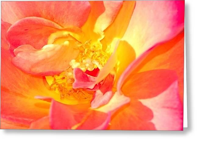 Multicolored Roses Greeting Cards - Glorius Rose Greeting Card by Linda Brody
