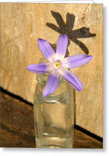 Glory Of The Snow In A Jar Greeting Card by Chris Berry