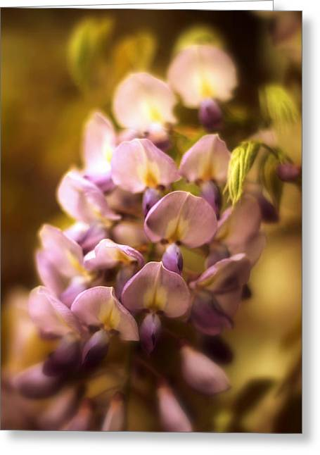 Wisteria Greeting Cards - Wisteria Afterglow Greeting Card by Jessica Jenney