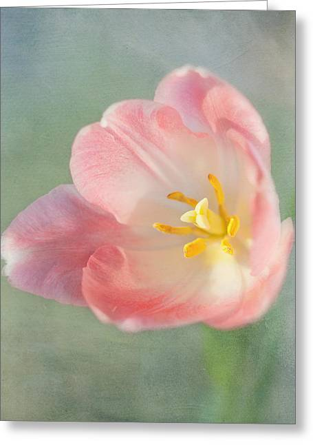 Mother Gift Greeting Cards - Glow Within-Pink Tulip Greeting Card by Kim Hojnacki