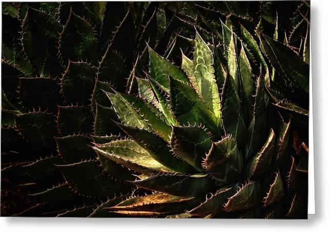 Fleshy Greeting Cards - Glowing Aloe Greeting Card by Mary Jo Allen