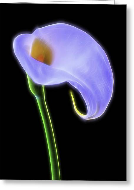 Glowing Greeting Cards - Glowing Calla Lily Greeting Card by Garry Gay