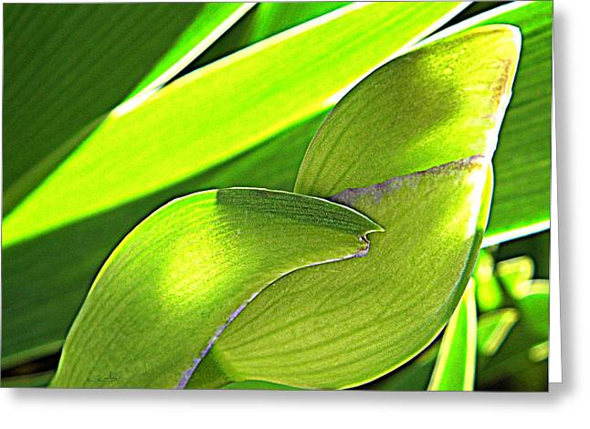 Green Transparency Greeting Cards - Glowing Iris Buds Greeting Card by Chris Berry