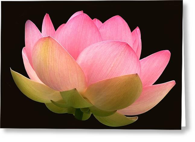 Byron Varvarigos Greeting Cards - Glowing Lotus Square Frame Greeting Card by Byron Varvarigos