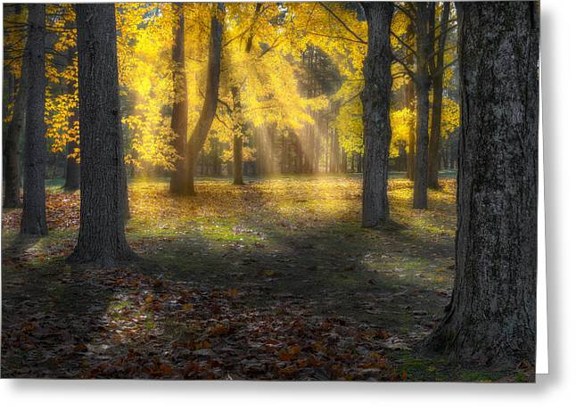 Soft Light Greeting Cards - Glowing Maples Greeting Card by Bill  Wakeley
