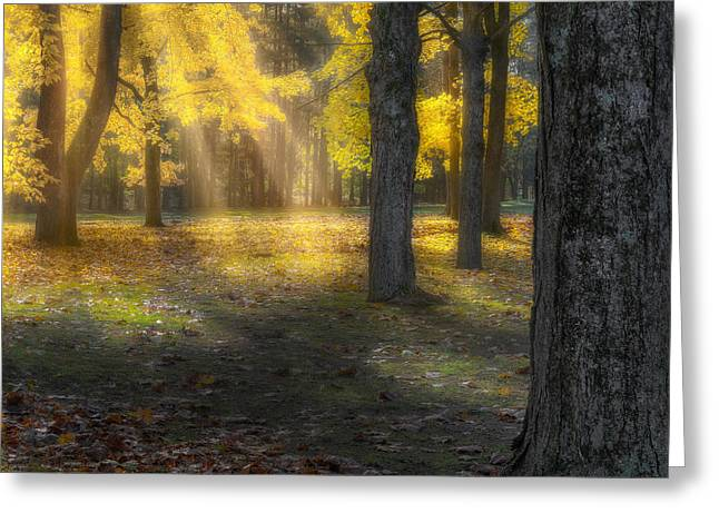 Soft Light Greeting Cards - Glowing Maples Square Greeting Card by Bill  Wakeley