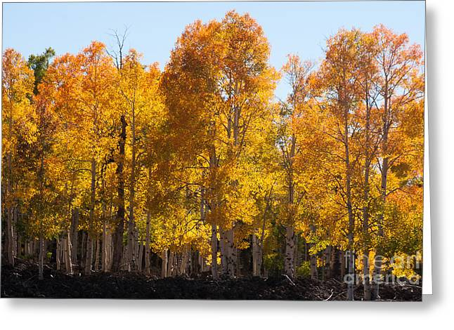 Geobob Greeting Cards - Glowing Orange and Yellow Aspen Trees near Navajo Lake Utah Greeting Card by Robert Ford