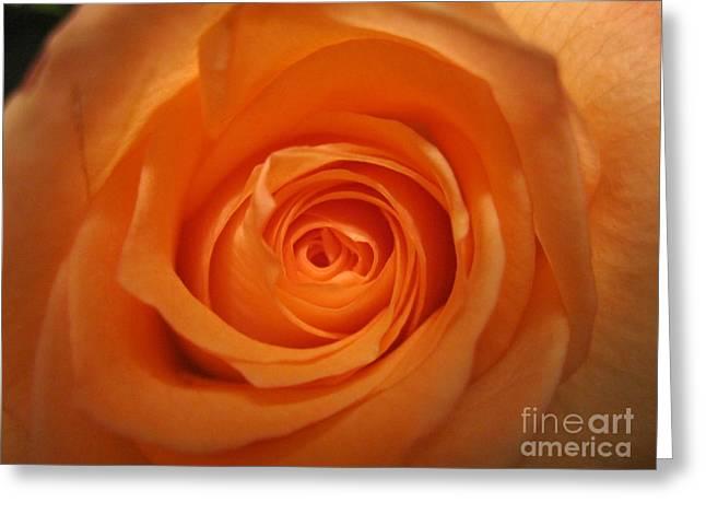 Glowing Drawings Greeting Cards - Glowing Orange Rose Greeting Card by Tara  Shalton