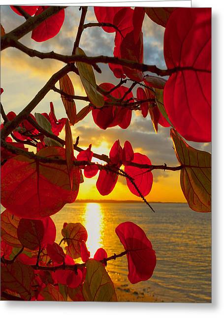 Tropical Beach Greeting Cards - Glowing Red Greeting Card by Stephen Anderson