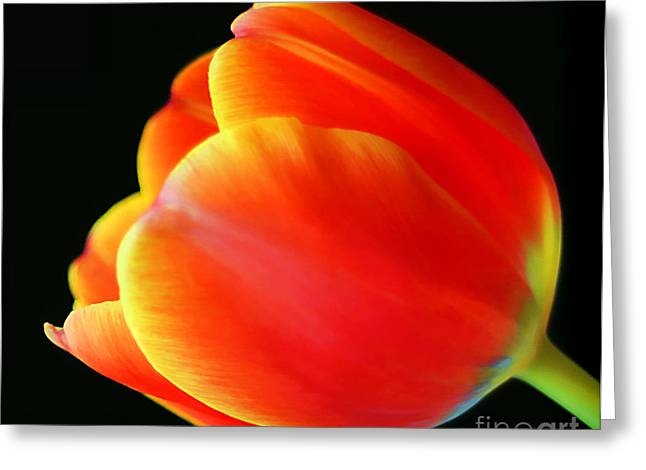 Glowing Tulip Greeting Card by Darren Fisher