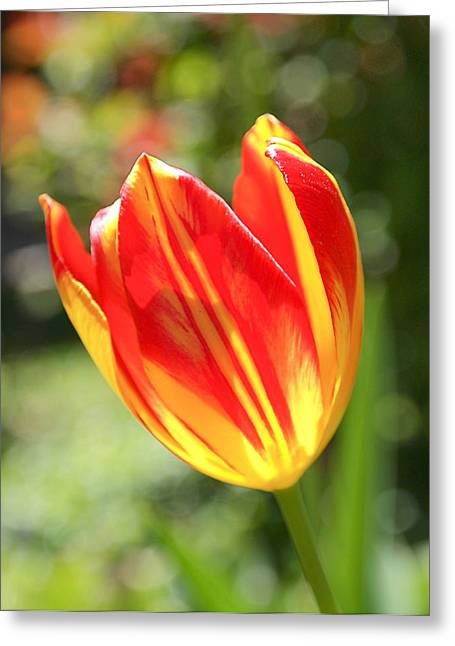 Green Photographs Greeting Cards - Glowing Tulip Greeting Card by Rona Black