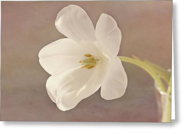 Mother Gift Greeting Cards - Glowing White Tulip Greeting Card by Kim Hojnacki