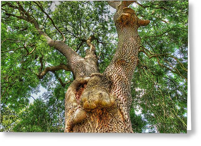 Orange And Brown Designs Greeting Cards - Gnarled Old Tree Greeting Card by Gill Billington