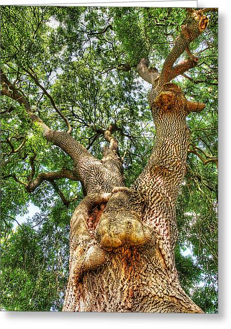 Orange And Brown Designs Greeting Cards - Gnarled Old Tree Vertical Greeting Card by Gill Billington