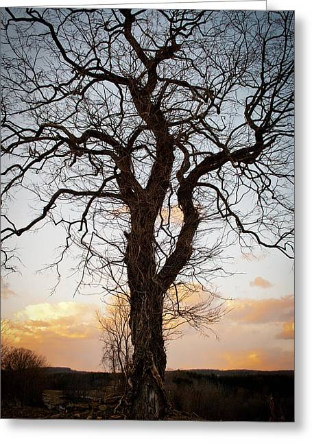 Tree Roots Greeting Cards - Gnarled Tree Greeting Card by Wayne King