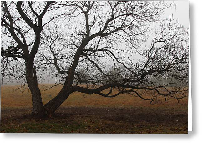 Gnarly Greeting Cards - Gnarled Within Fog Greeting Card by Rachel Cohen