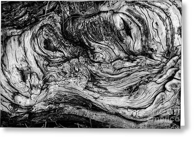 Wood Greeting Cards - Gnarled wood Greeting Card by Amy Cicconi