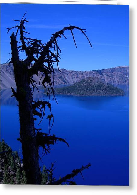 Crater Lake Artwork Greeting Cards - Gnarly Crater Tree Greeting Card by Roberta Hayes