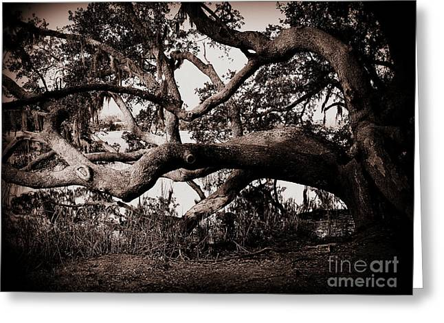 Charleston Greeting Cards - Gnarly Limbs at the Ashley River in Charleston Greeting Card by Susanne Van Hulst