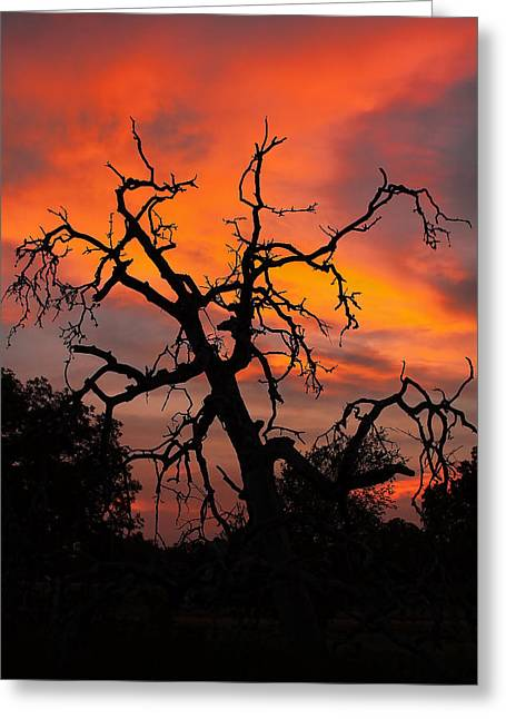 Gnarly Greeting Cards - Gnarly Sunset Greeting Card by Gary Holmes