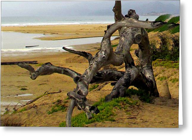 Gnarly Greeting Cards - Gnarly Tree Greeting Card by Barbara Snyder