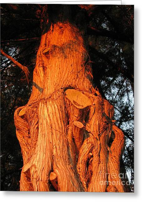 Gnarly Digital Greeting Cards - Gnarly Tree Greeting Card by Becky Hayes