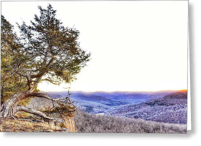 Gnarly Greeting Cards - Gnarly tree Greeting Card by Jeff Genova