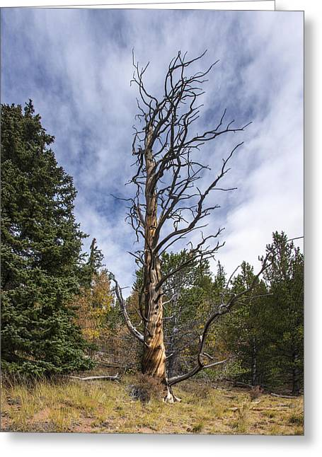 Gnarly Tree - Pancake Rocks - Divide Colorado Greeting Card by Brian Harig