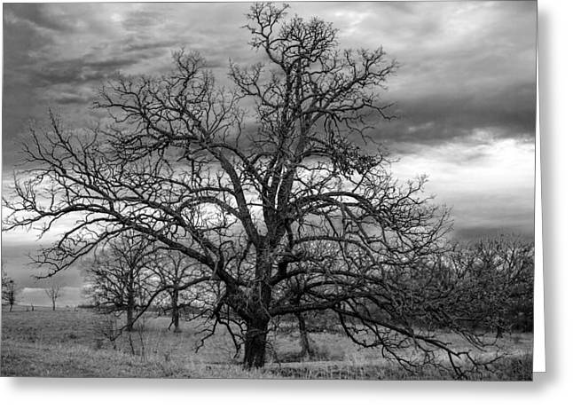 Gnarly Greeting Cards - Gnarly Tree Greeting Card by Sennie Pierson