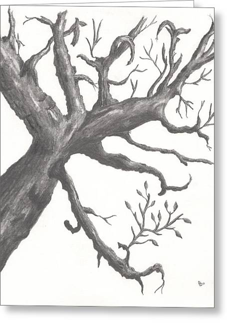Gnarly Drawings Greeting Cards - Gnarly Tree Greeting Card by Stephen Brissette