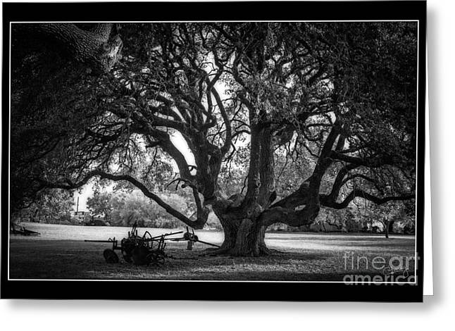 Gnarly Greeting Cards - Gnarly Tree with Plow Greeting Card by Imagery by Charly