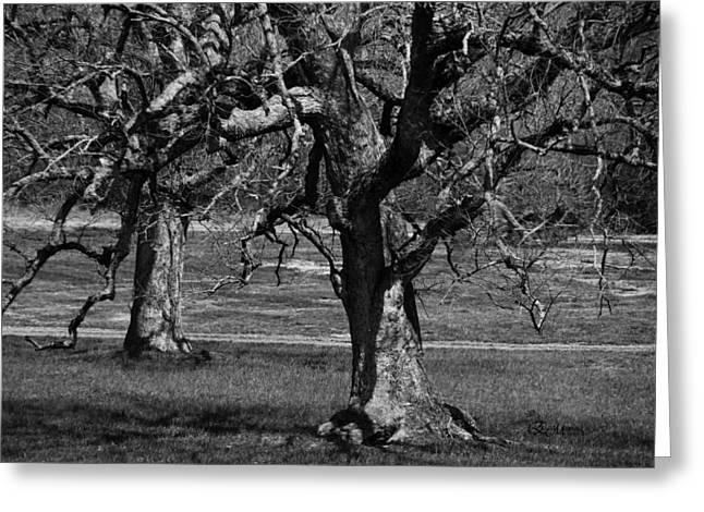 Gnarly Greeting Cards - Gnarly Trees - B and W - Featured in Comfortable Art Group Greeting Card by EricaMaxine  Price