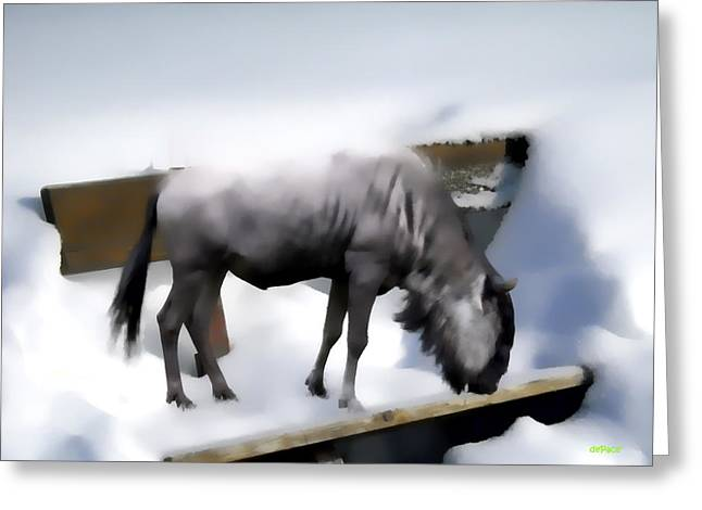 Grazing Snow Digital Greeting Cards - Grazing On A Snow Covered Bench Greeting Card by KJ DePace