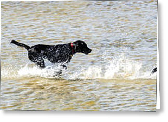 Best Friend Greeting Cards - Go Fetch Greeting Card by Chris Smith