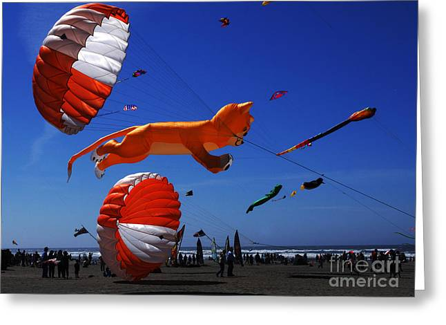 Kites Festival Greeting Cards - Go Fly A Kite 1 Greeting Card by Bob Christopher