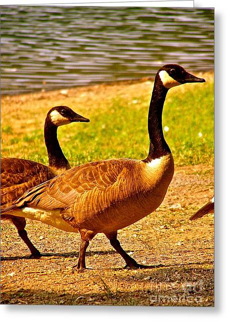 Lela Becker Greeting Cards - Go Geese Greeting Card by LeLa Becker