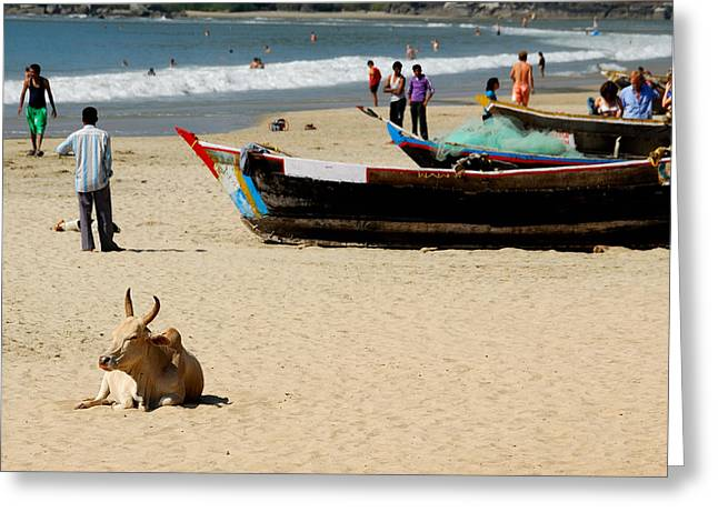 Stefan Carpenter Greeting Cards - Goan Beach Greeting Card by Stefan Carpenter