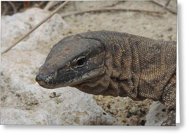 Goanna Greeting Cards - Goanna Greeting Card by Jeff Poole